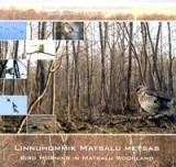Erinevad esitajad - Linnuhommik Matsalu metsas