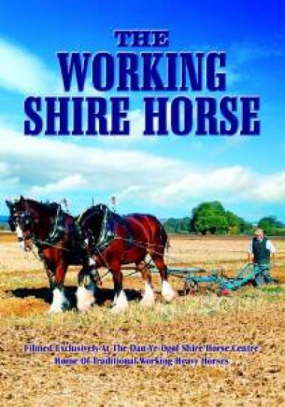 Documentary - Working Shire Horse